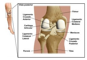 Distension ligamentos del hombro