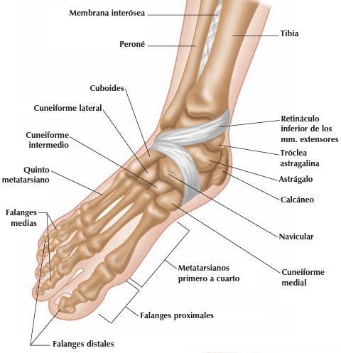 tendinitis pinrel empeine sintomas